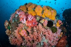 Colorful and Vibrant Coral Reef Stock Image
