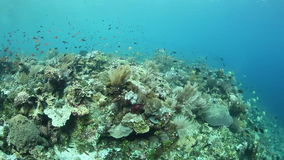 Beautiful Reef and Small Fish stock video footage