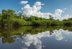 Beautiful Reflection of the Amazon Jungle on Water Stock Image