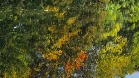 Reflection in water. Beautiful reflection of the autumn forest in the lake stock video