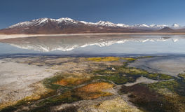Beautiful reflection in mountain lake with insane coloration on the foreground. Catching this moment at Laguna Blanco, Uyuni tour, Bolivia stock photo