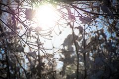 Winter Woods on a Sunny Day Royalty Free Stock Photography