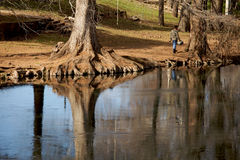 Beautiful Reflection of Trees Royalty Free Stock Images
