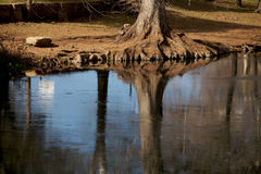 Beautiful Reflection of Trees Royalty Free Stock Photos
