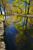 Beautiful reflection of trees in a puddle in a city park in the early morning II Royalty Free Stock Image