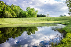 Beautiful and reflections in water Royalty Free Stock Photography