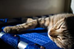 A nap under the sun royalty free stock photo