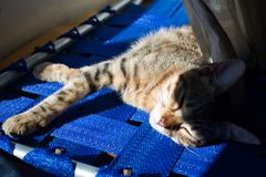 A nap under the sun royalty free stock image