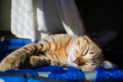 A nap under the sun stock image