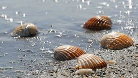Beautiful relief seashells that wash a wave. Beautiful relief seashells that wash the wave stock video footage