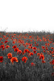 Beautiful Rememberence Day poppy field landscape with copy space Royalty Free Stock Photography
