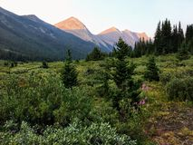 Beautiful remote area in the Canadian Rockies with the mountains in the background, and shrubs and fireweed in the foreground. stock photos