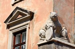 A beautiful Renaissance lion statue on old house,lviv,ukraine Royalty Free Stock Photos