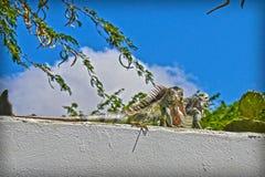 Beautiful reptile taking a little sun royalty free stock photos