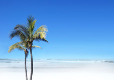 A beautiful resort view of a palm tree on a beach Royalty Free Stock Images