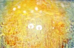 Beautiful retro photo dandelions Stock Image