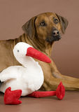 Dog with stork toy Royalty Free Stock Images