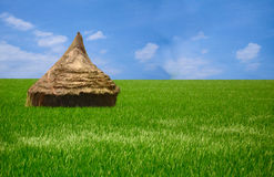 Beautiful Rice Field. Green grass and a blue sky seperated by a small hut Stock Images