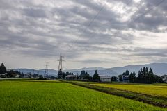 Beautiful rice field in Akita, Japan stock photo