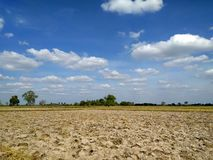 Beautiful rice field landscape with blue sky stock photography