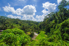 Beautiful rice fields in the jungle and the mountain near Ubud. In Bali, Indonesia Royalty Free Stock Image