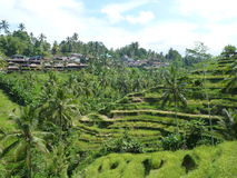 Beautiful rice fields of Tegalalang, Bali, Indonesia Stock Photography