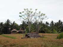 Beautiful rice fields, Ubud, Bali. Really very beautiful place, full of peace and harmony stock photography