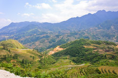 Beautiful rice terraced fields Royalty Free Stock Photo