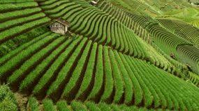 Beautiful rice terraced fields in Indonesia.  stock photos