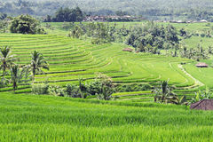Beautiful rice terraces Stock Images