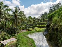 Rice terraces in Tegallalang, Ubud, Bali, Indonesia Asia stock photos