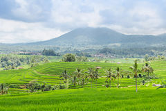 Beautiful rice terraces and mountains on Bali Stock Images