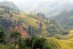 Beautiful rice terraces in Sapa, Vietnam