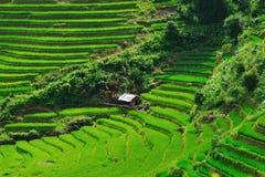 Beautiful rice terraces in Sapa,Vietnam Royalty Free Stock Photography