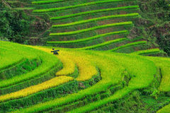 Beautiful rice terraces in Sapa,Vietnam Royalty Free Stock Photography