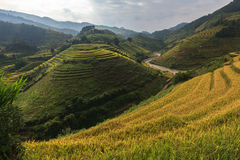 Beautiful Rice Terraces, South East Asia. Stock Photo