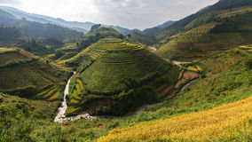 Beautiful Rice Terraces, South East Asia. Stock Image