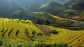 Beautiful Rice Terraces, South East Asia,Vietnam. Stock Images