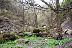 Beautiful and rich nature of the Republic of Moldova Stock Photography