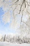 Beautiful rime of the north of China Royalty Free Stock Photography