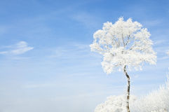 Beautiful rime of the north of China Stock Photography