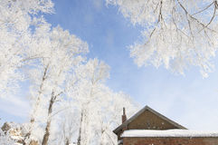 Beautiful rime of the north of China Royalty Free Stock Photos