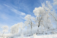 Beautiful rime of the north of China Stock Images
