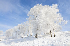 Beautiful rime of the north of China Stock Photo