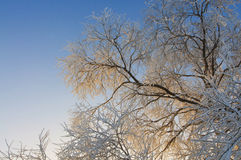 Beautiful rime and sunrise Royalty Free Stock Photo