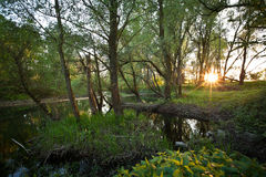 Beautiful riparian forest scenery Royalty Free Stock Photo