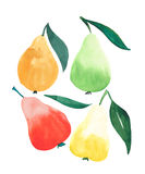 Beautiful ripe juicy four pears orange green red and yellow colors isolated watercolor stock illustration