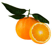 Beautiful, ripe oranges Royalty Free Stock Photo