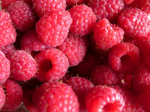 Beautiful ripe raspberries Stock Photos