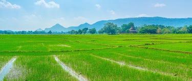 Beautiful rise fields of Sri Lanka. Damatamal Vihara surrounded with beautiful green rise fields, Okkampitiya, Sri Lanka Royalty Free Stock Images